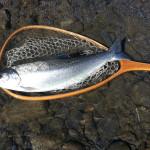 FISH0006