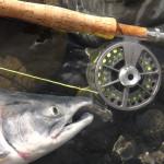 FISH0030